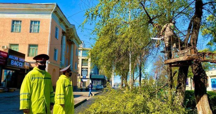 Столичный муниципалитет все еще ликвидирует последствия выпавшего снега — убирает ветки и устраняет проблемы с электропроводами.