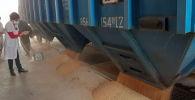 В Кыргызскую Республику доставлено 760 тонн пшеницы