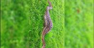 Питон вместе с проглоченной добычей весил 40 килограммов. Такие крупные рептилии способны проглотить 6-летнего ребенка.