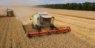 Уборка озимой пшеницы на поле. Архивное фото