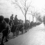 Колонна служебных верблюдов. Этот караван преодолел путь от Сталинграда до Берлина.