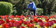 Велосипедист в медицинской маске проезжает мимо цветущих тюльпанов в центре Бишкека. Архивное фото