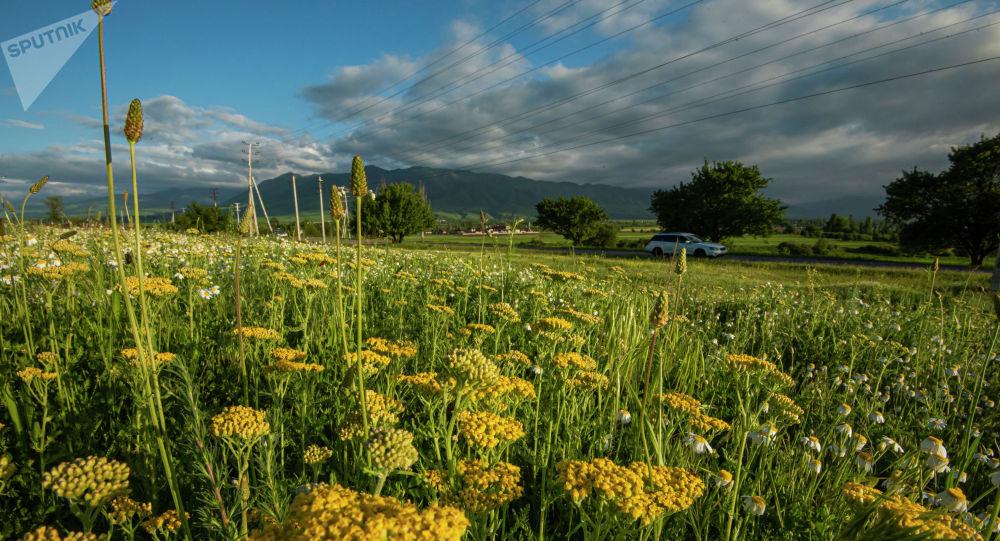 Цветочное поле на окраине Бишкека в Чуйской области. Архивное фото