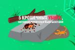 Иногда смерть подстерегает человека в траве. Ежегодно сотни укушенных кыргызстанцев обращаются за помощью к докторам. Как выглядят пять убийц, которые по размеру меньше ладони, смотрите в видеоинфографике.