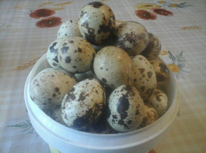 Перепелиные яйца на ферме кыргызстанца Радмира Хайруллина