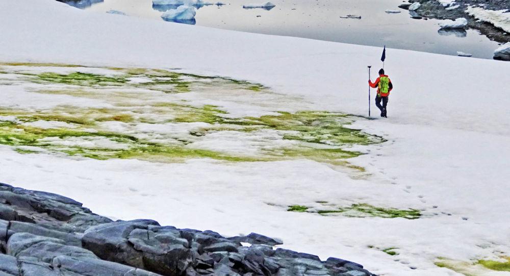 Исследователь Эндрю Грей геотегирует снежные водоросли, цветущие на острове Анкоридж, недалеко от станции Дэвис, Антарктида. 19 мая 2020 года