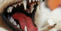 Голова волка на международной выставке. Архивное фото