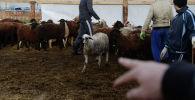 Овцы на скотном рынке. Архивное фото