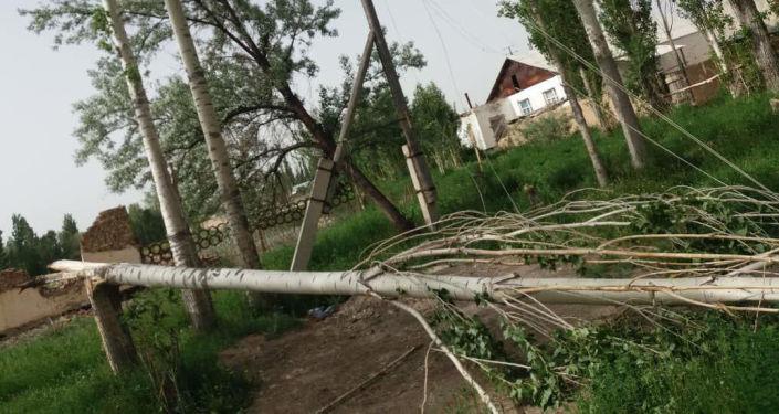 Упавшее дерево после шквалистого ветра одном из районов Нарынской области