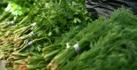 Укроп жана петрушка чөптөрү. Архивдик сүрөт