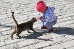 Ребенок играется с кошкой на улице. Архивное фото
