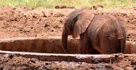 Кадры сняли в национальном парке Восточный Цаво (Кения). Для спасения слоненка, упавшего в яму, здесь провели наземно-воздушную операцию.