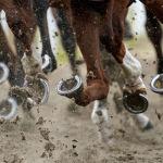 Лошади на ипподроме Челмсфорд Сити в Англии