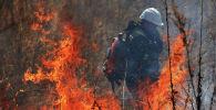 Сотрудник МЧС во время тушения лесного пожара. Архивное фото