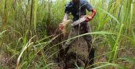 В американском штате Флорида змеелов снял на видео как сошелся в кровавой битве с пятиметровым питоном весом около 70 килограммов.