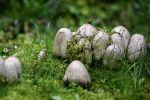 Грибы растут на на траве. Иллюстративное фото
