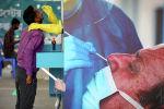 Коронавируска анализ жасоого үлгү алып жаткан медицина кызматкери