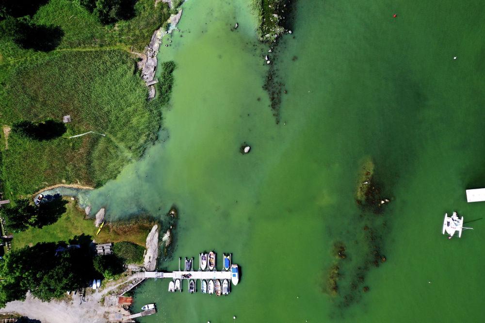 Побережье Балтийского моря недалеко от Стокгольма (Швеция), окрашенное в зеленый цвет из-за цветения водорослей. 25 июня 2020 года