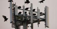Птицы сидят на вышке сотовой связи. Архивное фото